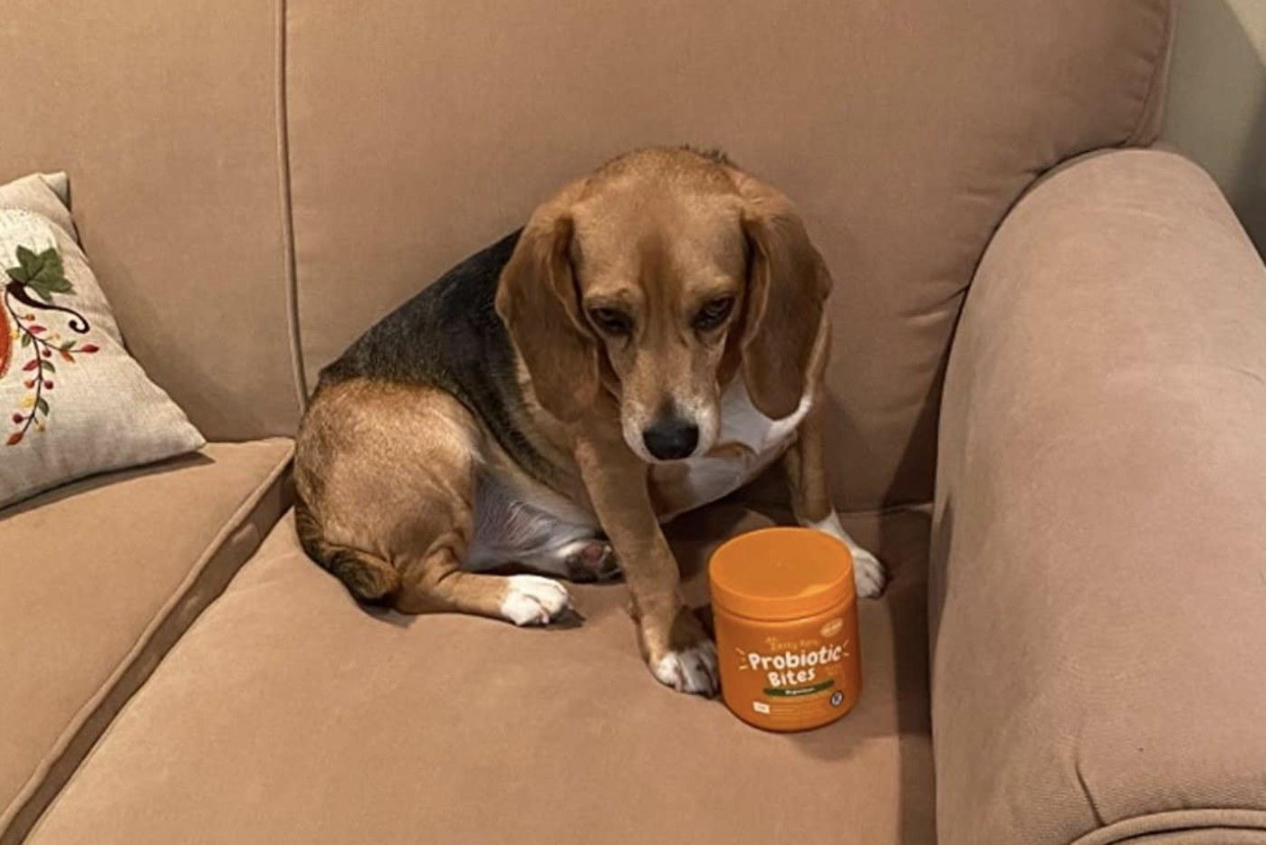 a dog sitting next to the jar of probiotics