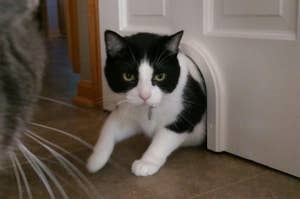 a black and white cat walking through a cat door at the bottom of a door
