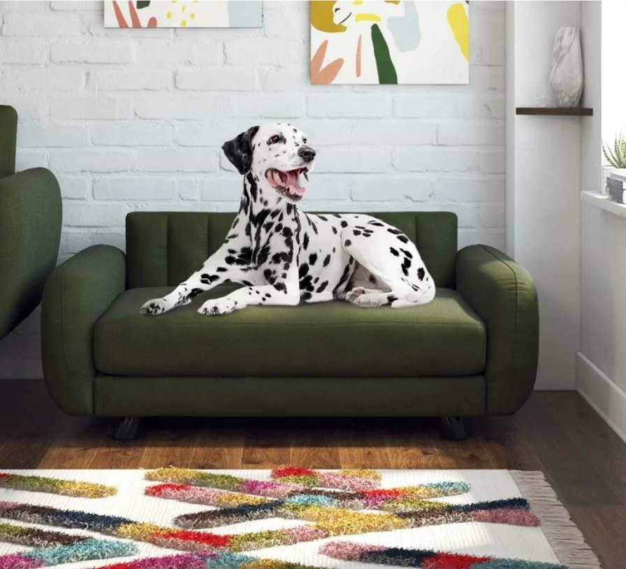 A green, tufted dog bed with a cushion back in a living room with a Dalmatian sitting on it