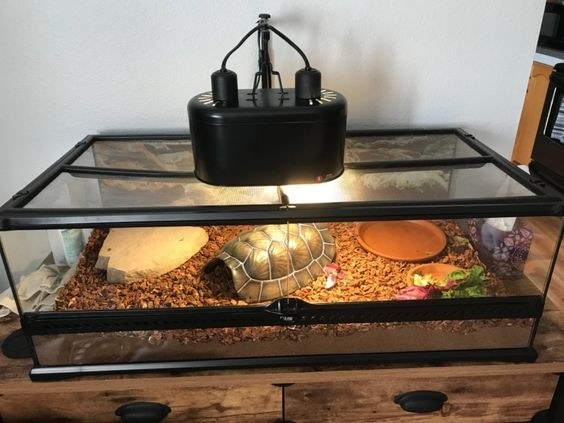 Reviewer's picture of the heating lamp warming a large tank