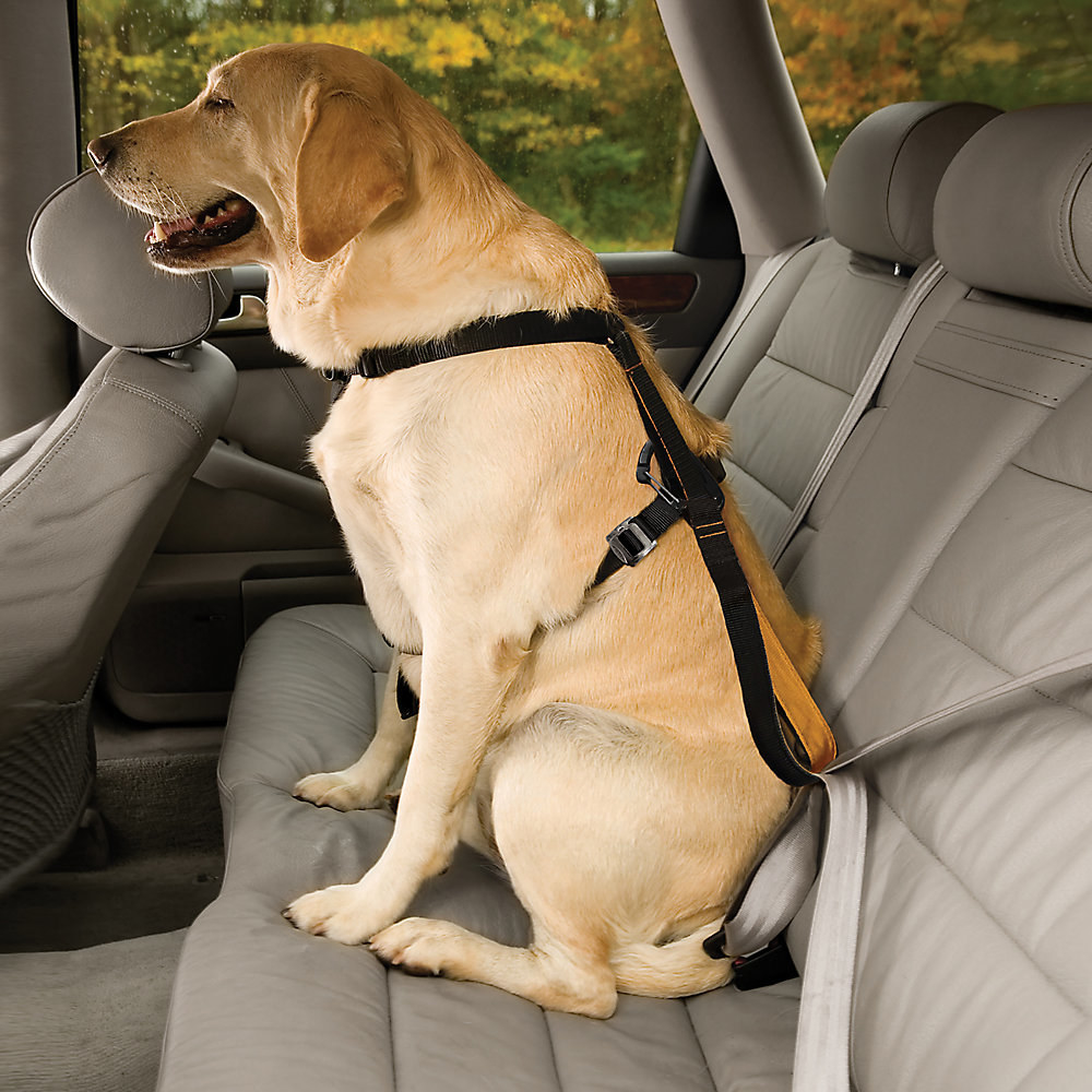 a dog in the back seat wearing the dog harness