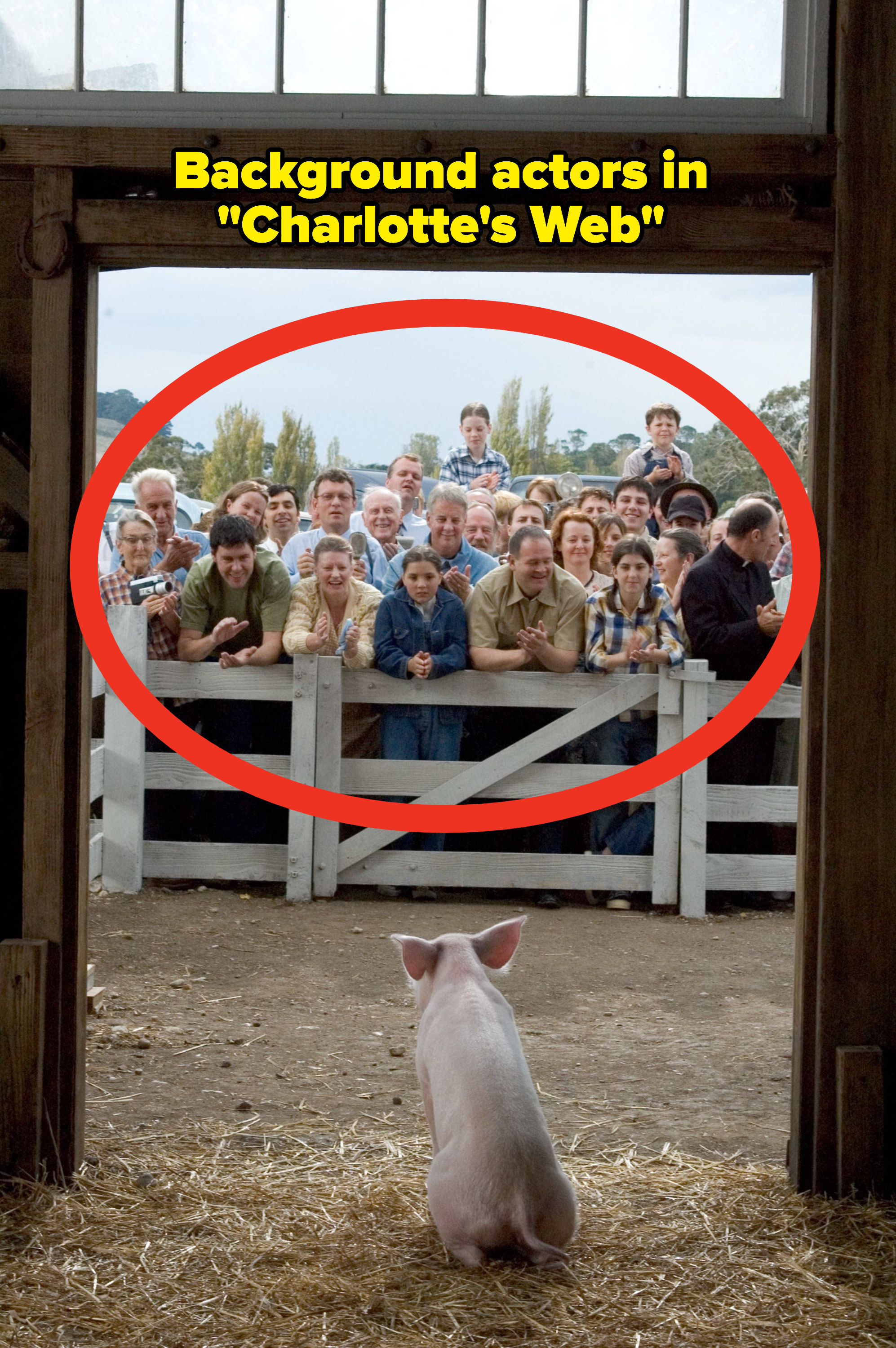 A group of people staring at a pig