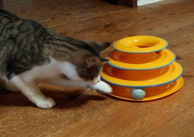 Reviewer's photo of a cat playing with the tower track
