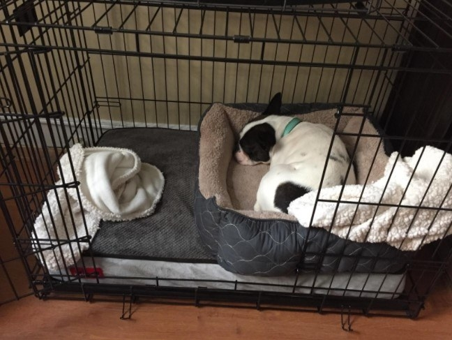 Reviewer's photo of a dog in the crate