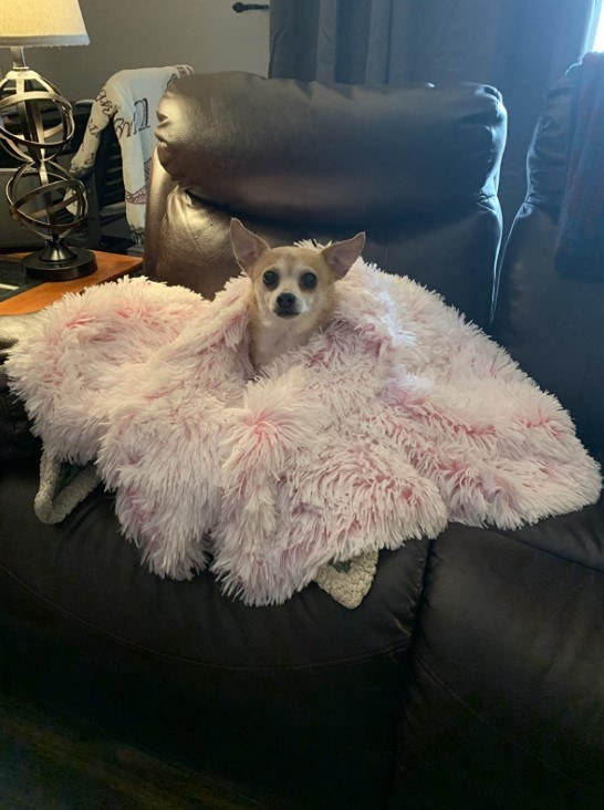 Reviewer's photo of a dog with the blanket in the color Rose Pink