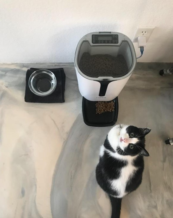 Reviewer's photo of a cat with the feeder