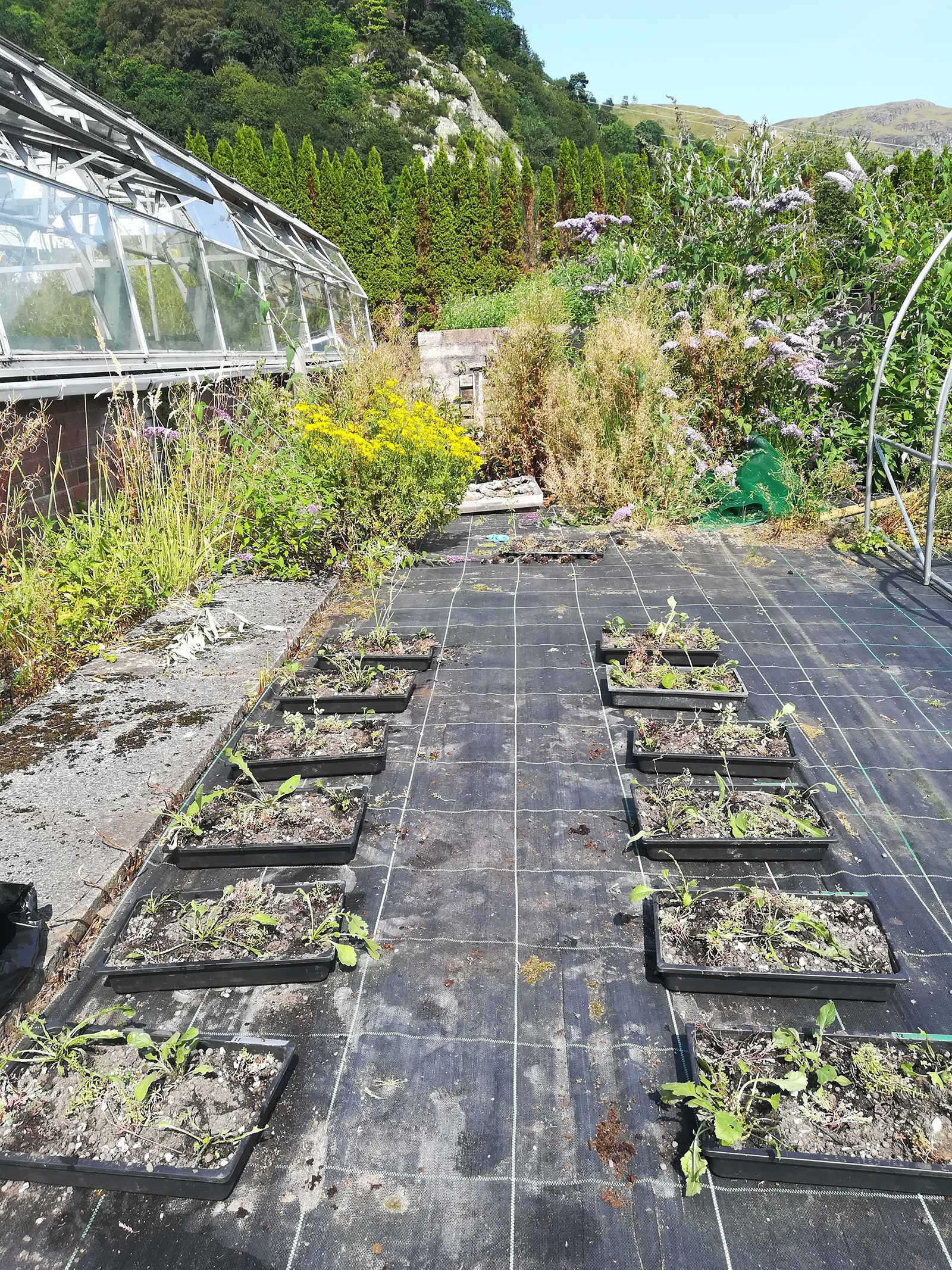 Two rows of six trays each in a garden