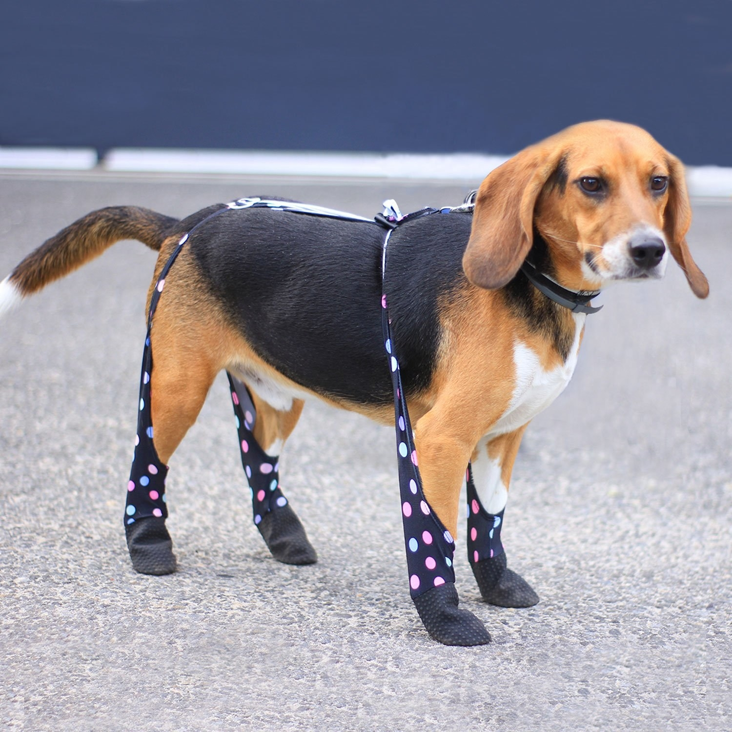 dog wearing leggings with foot booties at the end