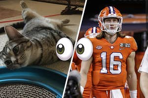 My cat Kassie and Trevor Lawrence