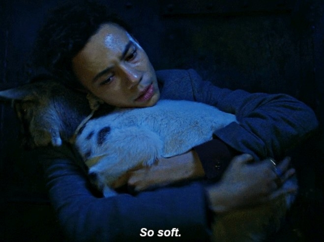 "Jesper cuddles a goat and says ""so soft"""