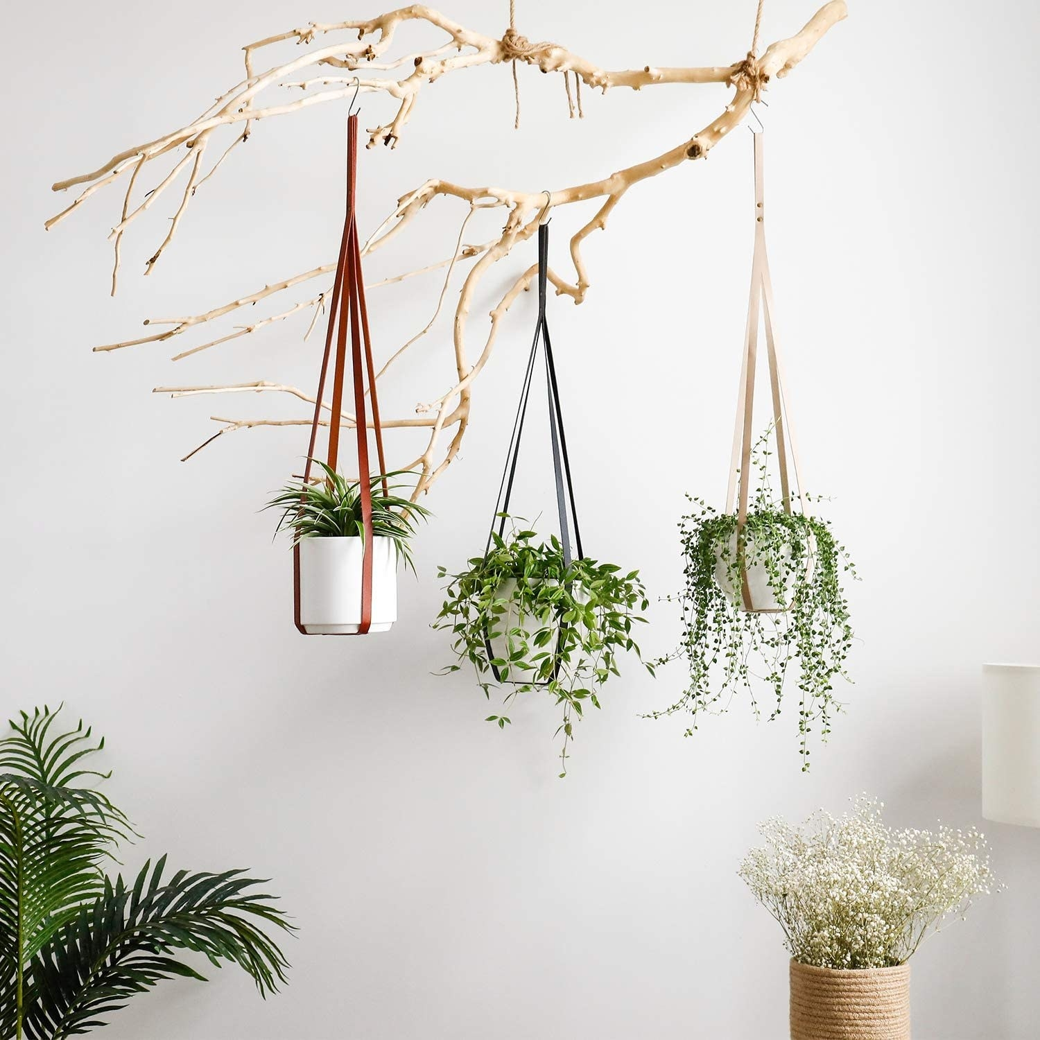 Three plants in faux leather hangers