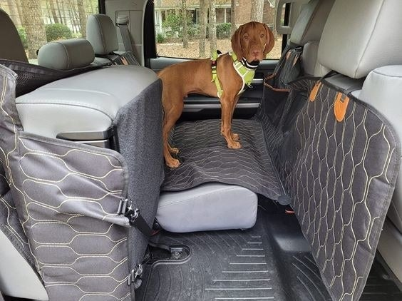 Reviewer Photo: The Backseat Cover