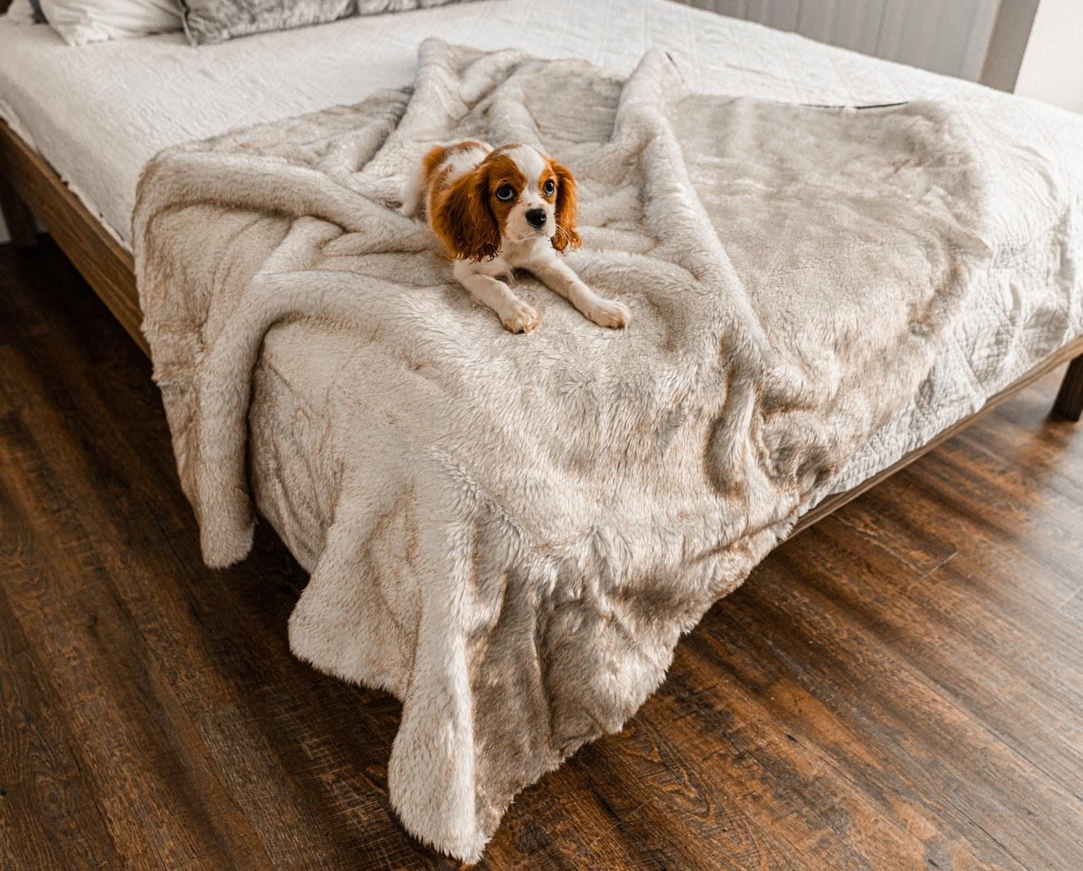 Dog sitting on the fuzzy blanket