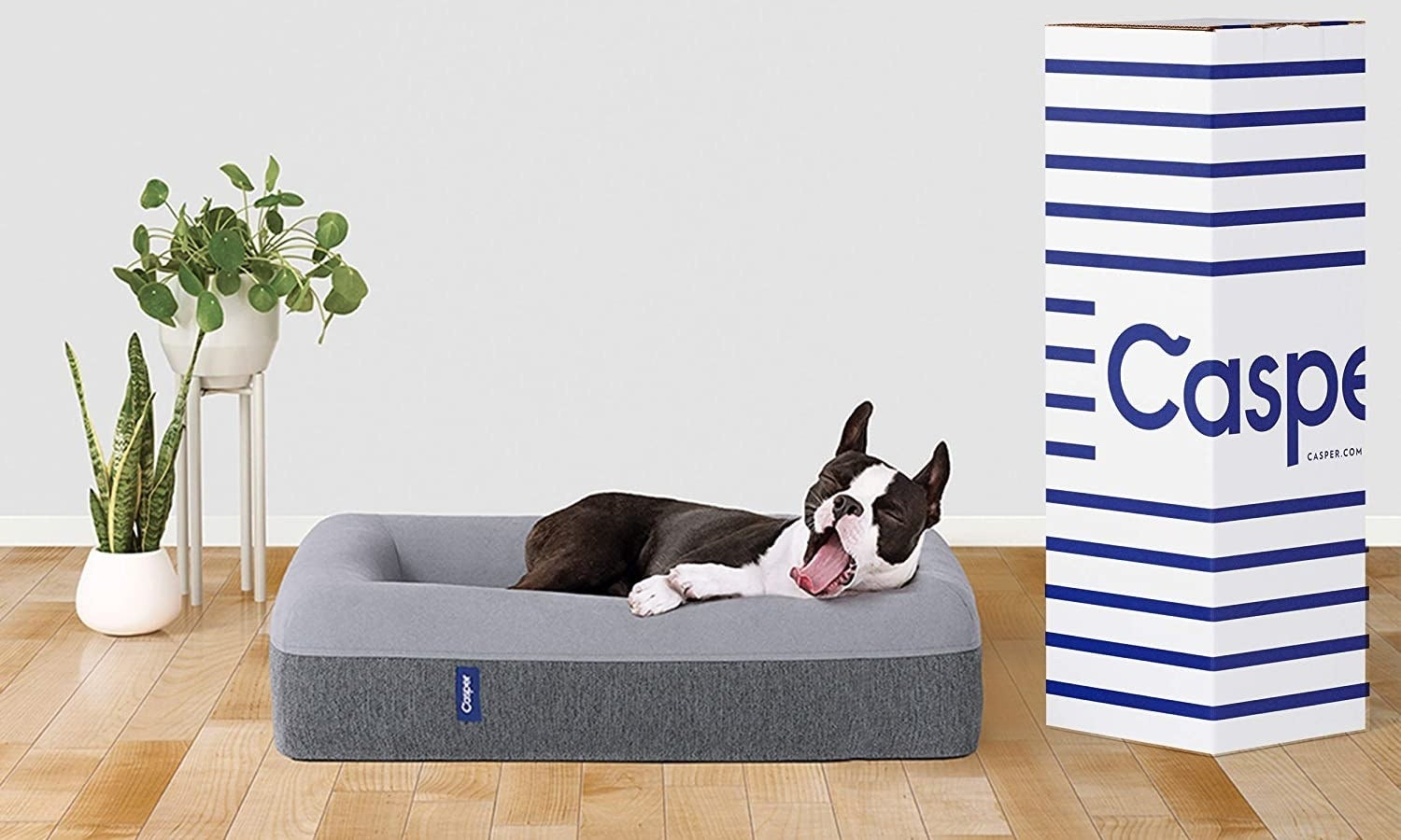 The dog bed