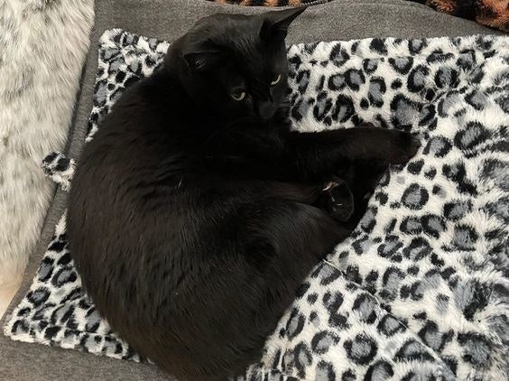 Reviewer's photo of a cat on the blanket in the color Quilted Faux Fur Snow Leopard