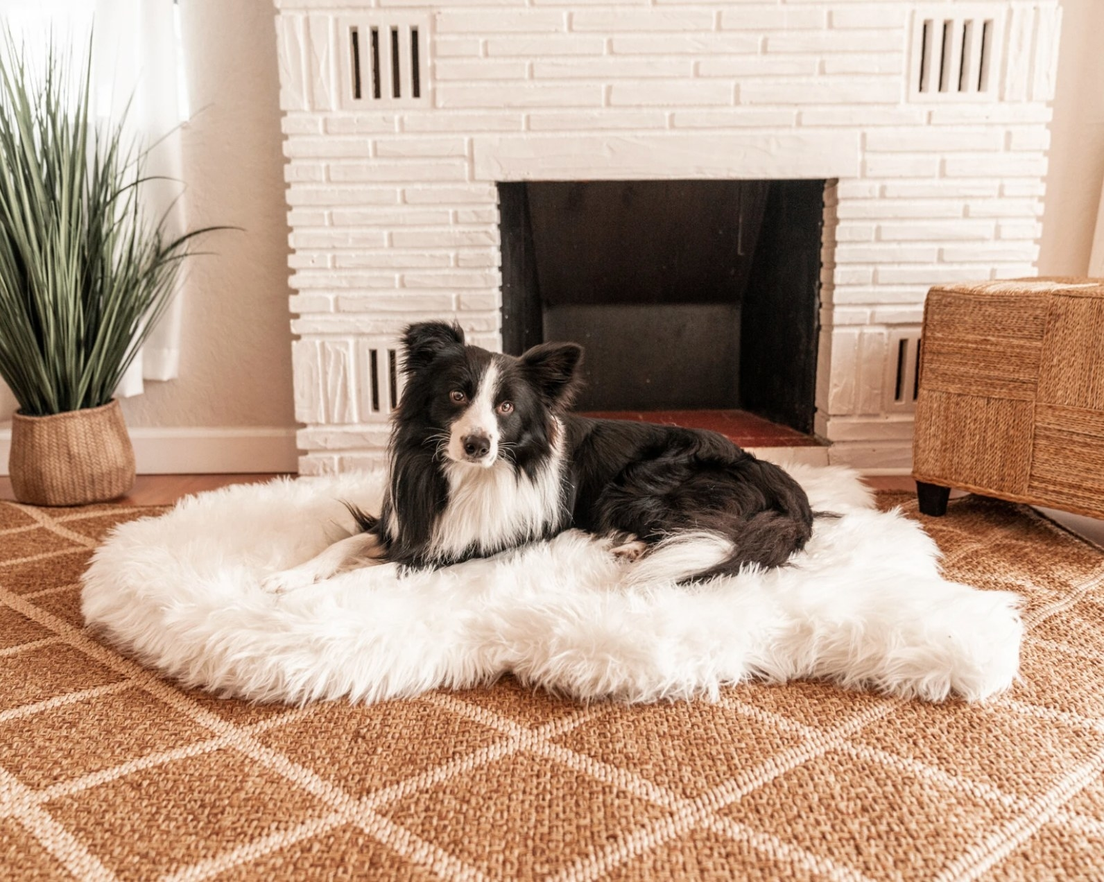 The faux fur dog bed
