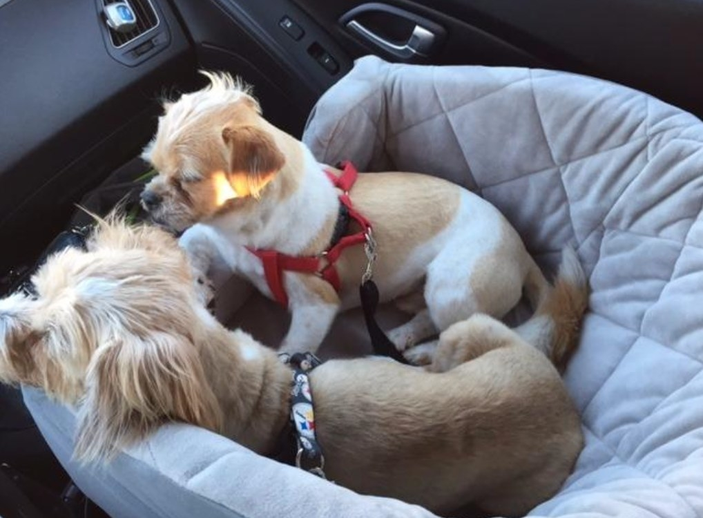 Reviewer Photo: Pups in the booster seat