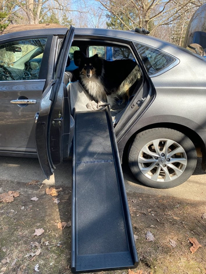 Reviewer Photo: The pet ramp
