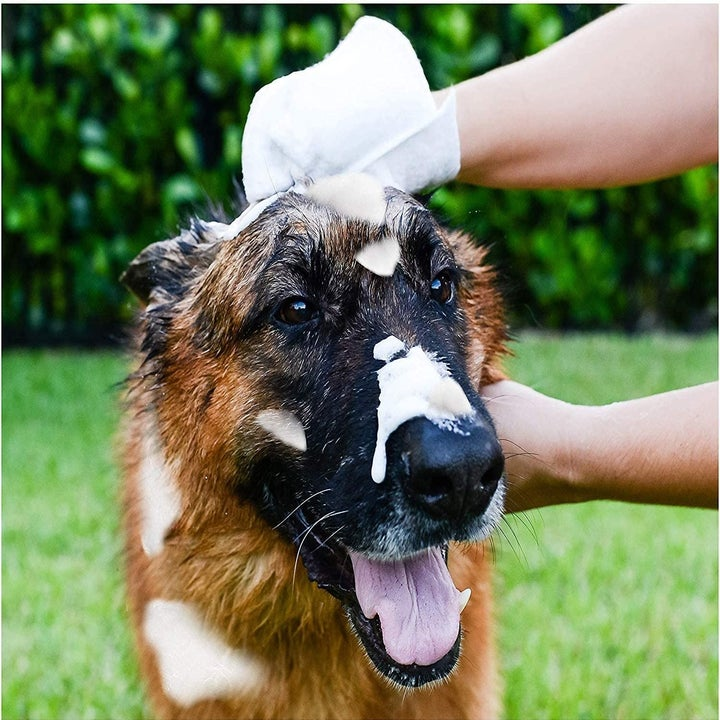 Model using shampoo mittens on dog