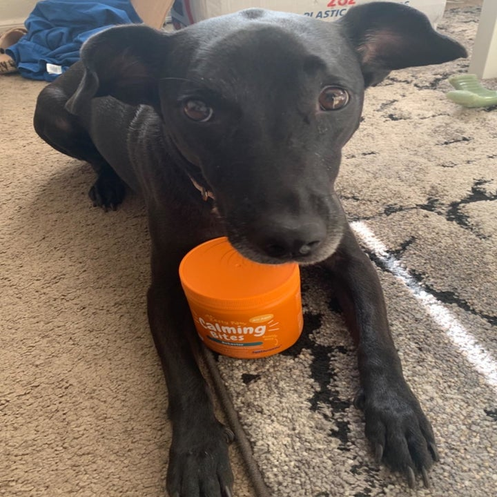 Dog posing with bottle of Calming Chews