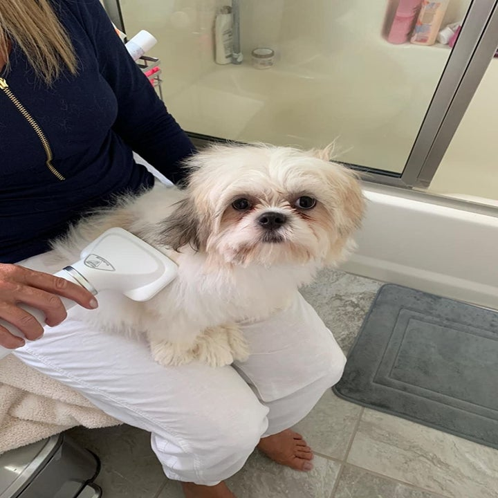Reviewer using dryer on dog