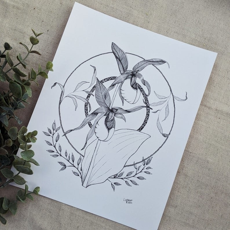 The black and white print of Lindsey Ross's illustration that displays PEI's provincial flower, the lady's slipper