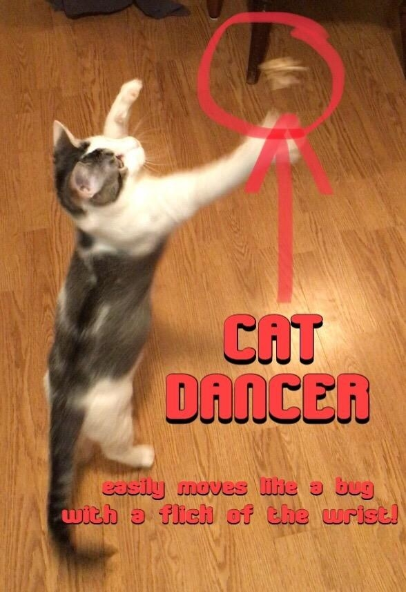 """A cat plays with the toy in an image labelled """"CAT DANCER, easily moves like a bug with a flick of the wrist!"""""""