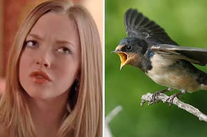 """On the left, Karen from """"Mean Girls"""" furrowing her brow in confusion, and on the right, a baby bird with its mouth open"""