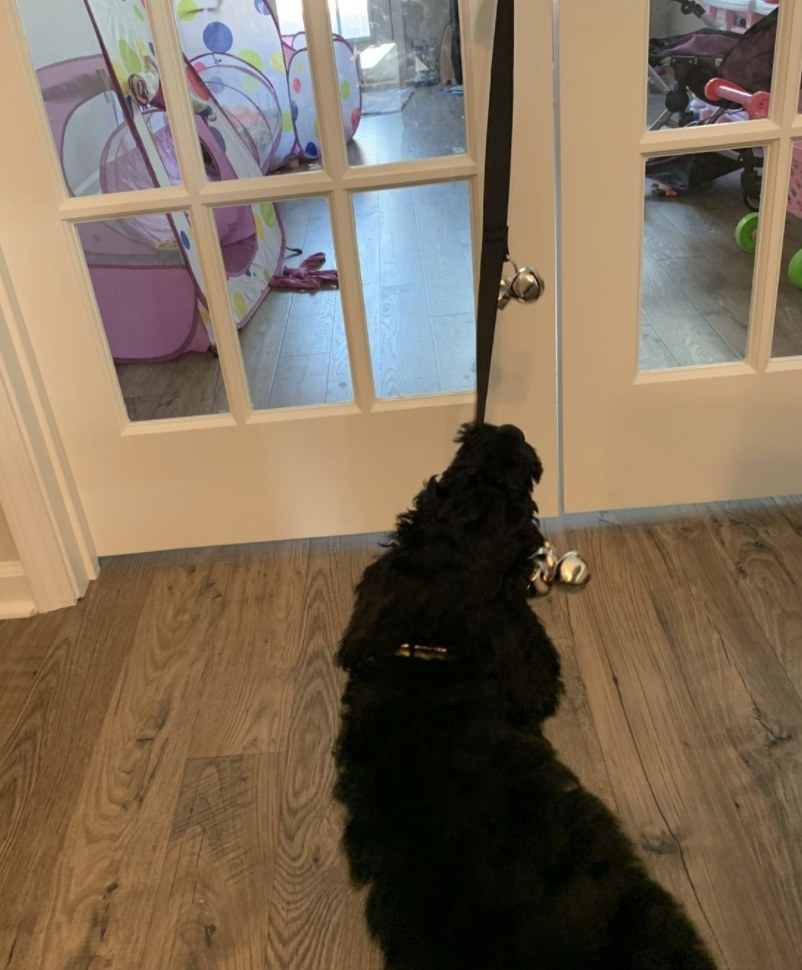 A dog pulling on a doorbell