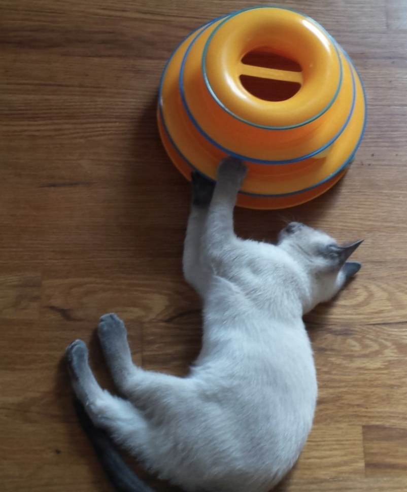 A cat playing with a tiered cat tracks toy