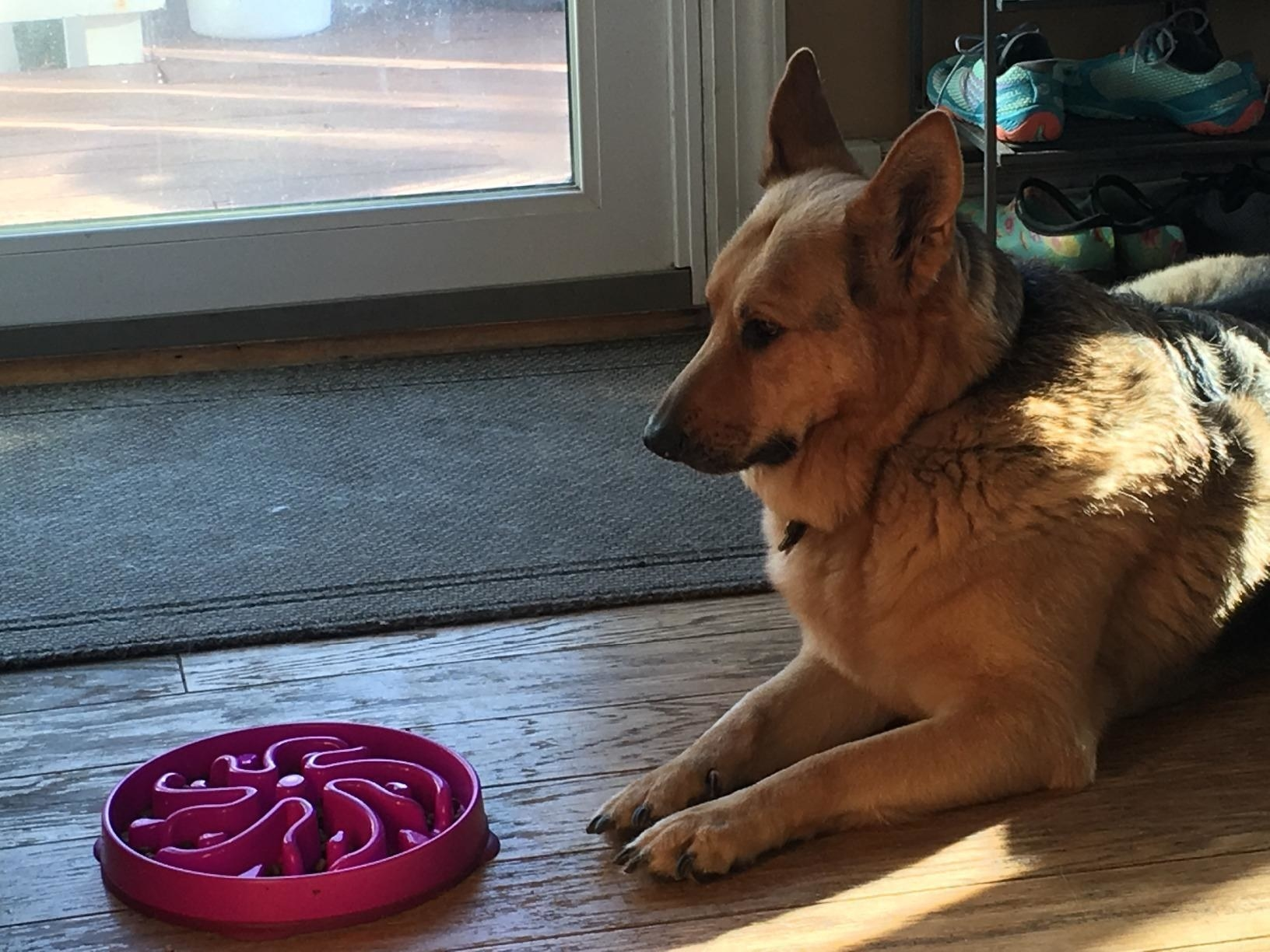 a reviewer's dog sitting in front of the pink feeding bowl