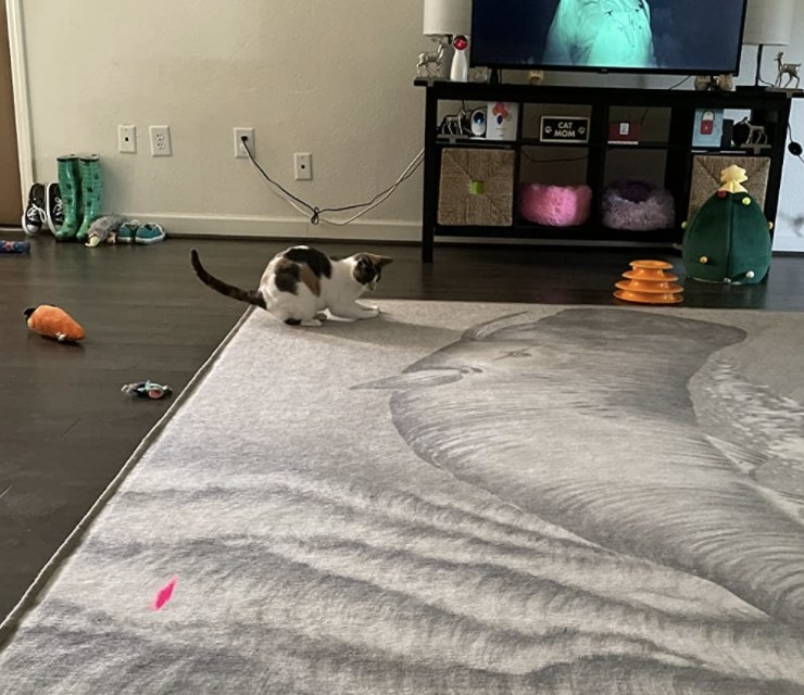 A cat playing with a laser pointer