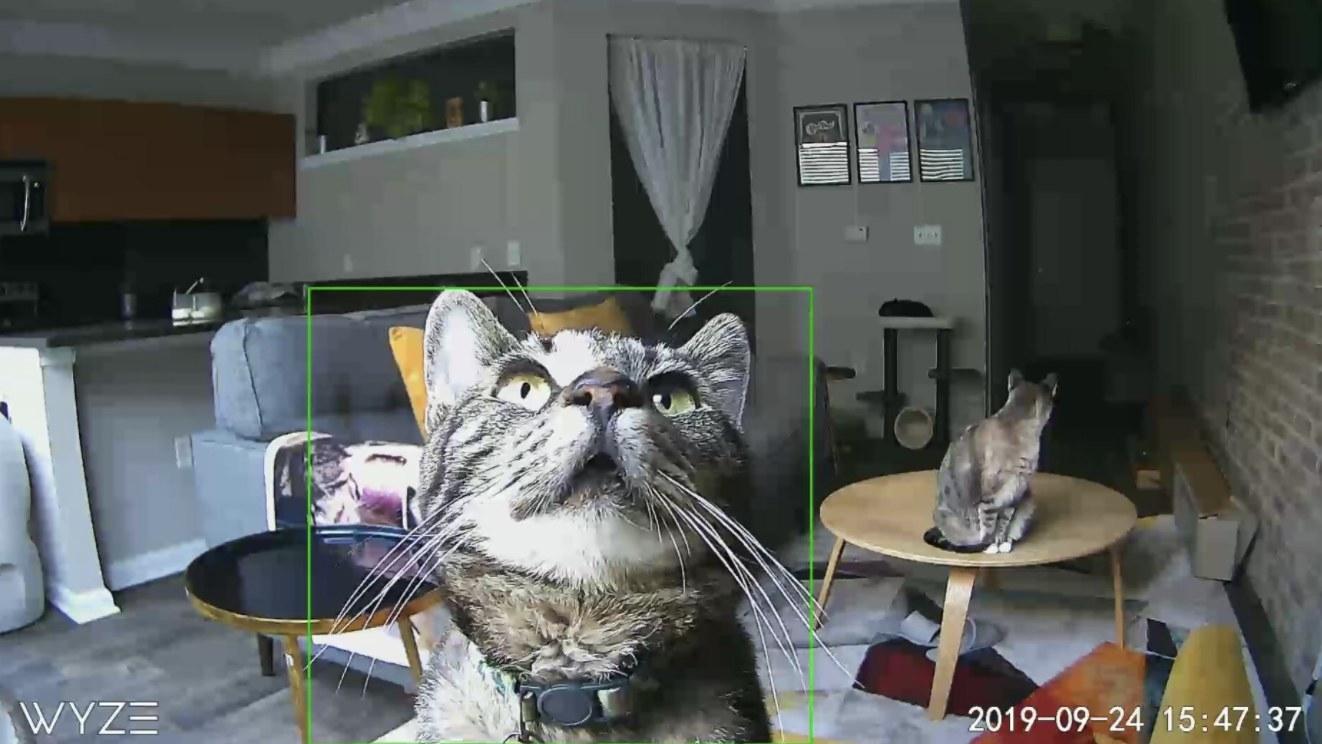 A cat staring at a camera