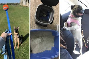 A split thumbnail of two dogs and a litter genie