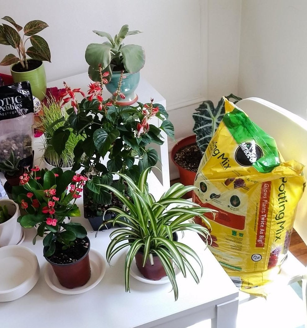 Reviewer's various plants planted in containers with product