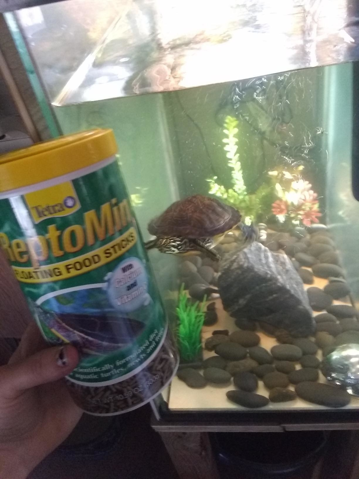 A turtle swims towards a container of the food