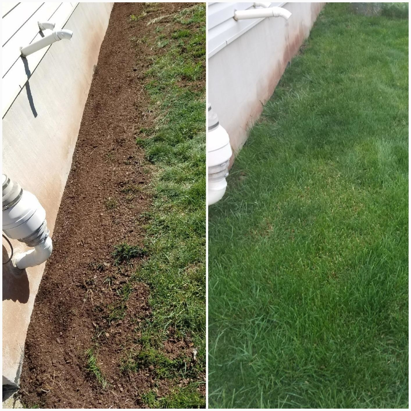 Before and after of reviewer's yard after using product