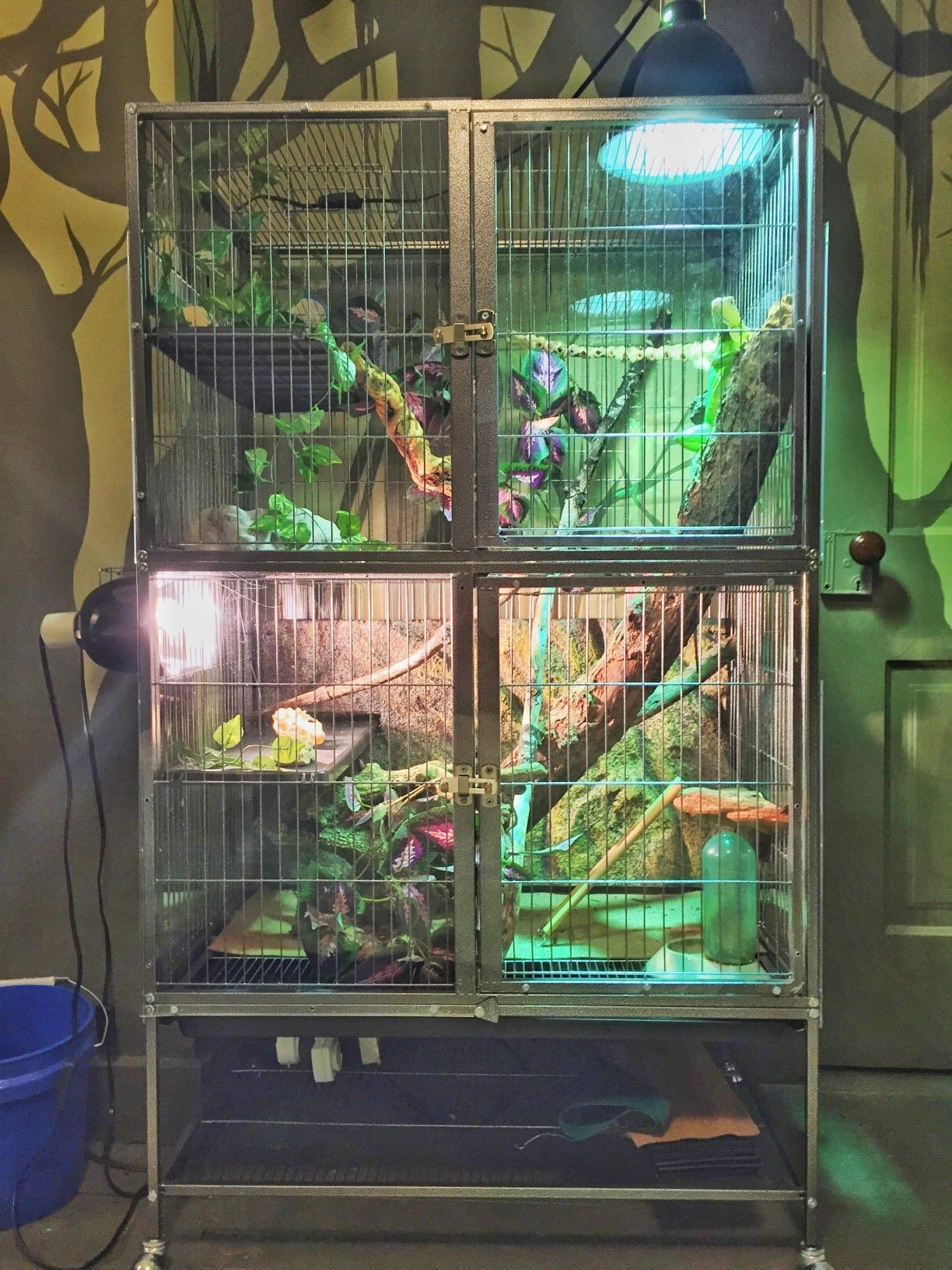 The cage used for reptiles