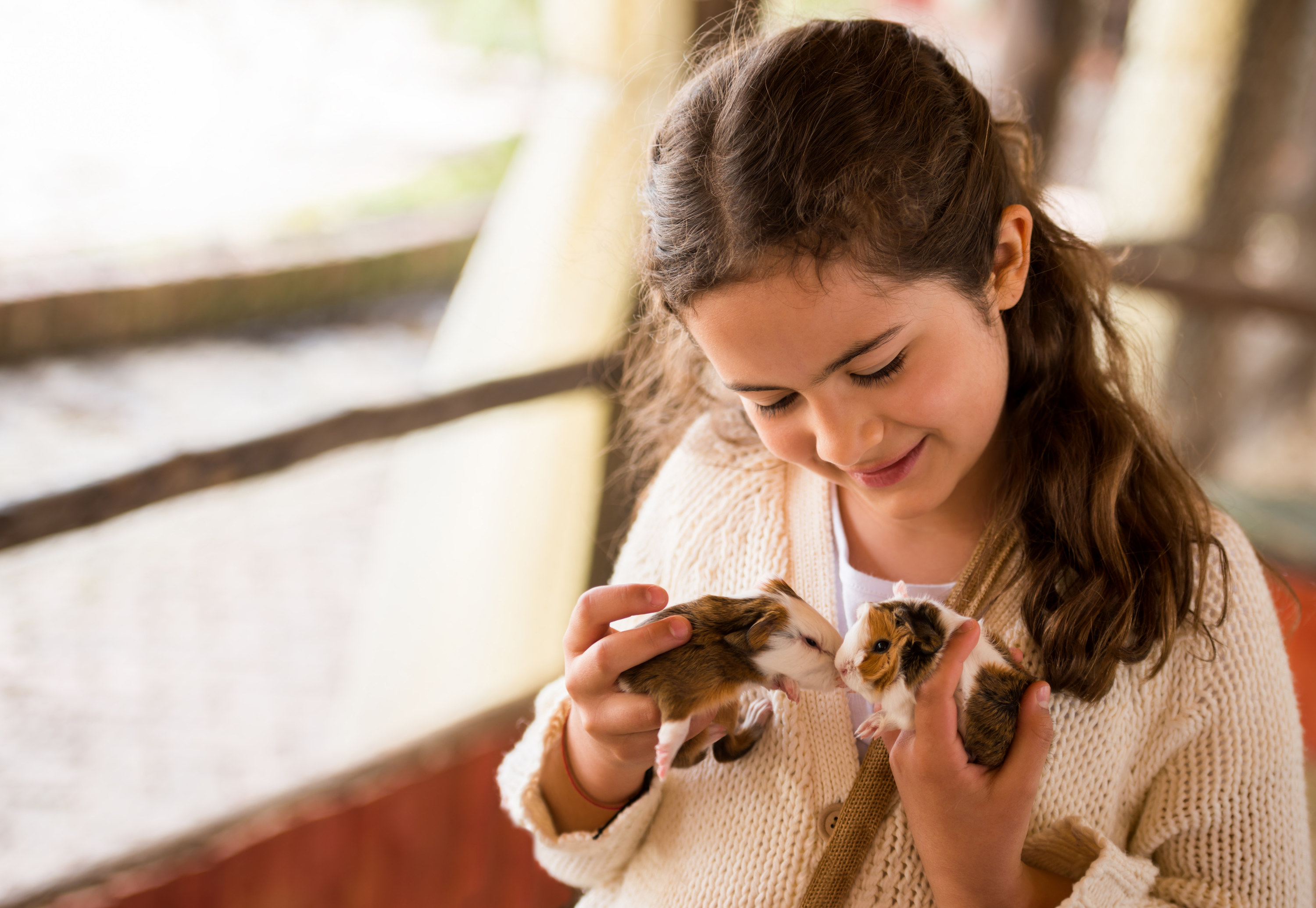 Young girl holding two guinea pigs with their noses touching each other's.