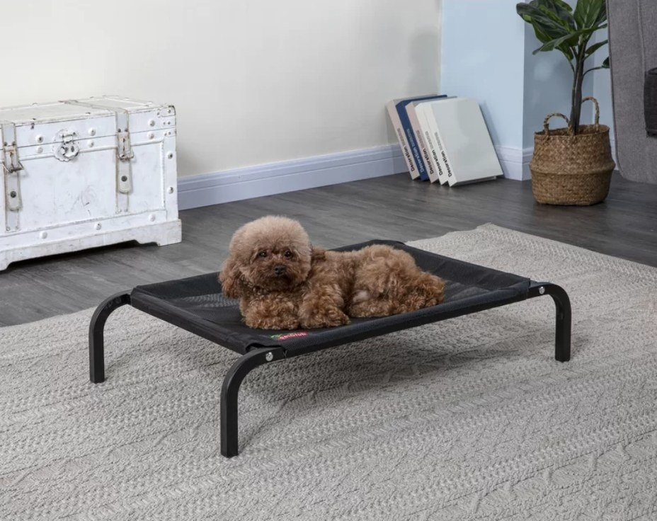 Dog laying on black cooling cot