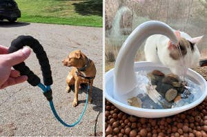 a reviewer holding their dog on a blue leash and a reviewer's cat drinking from a white fountain
