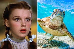 Judy Garland as Dorothy and a turtle