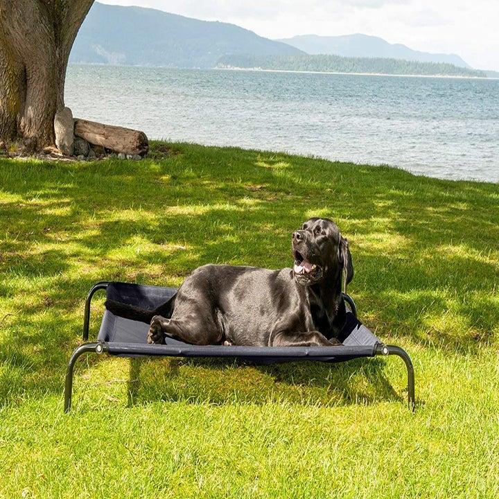 Black dog sunbathing while lying on a black cot