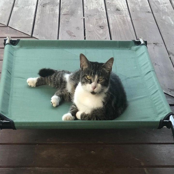 Cat lying on a green cot