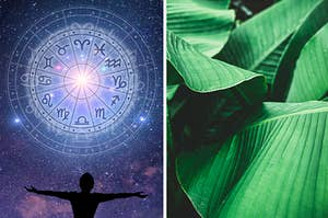 Zodiac sign and plants