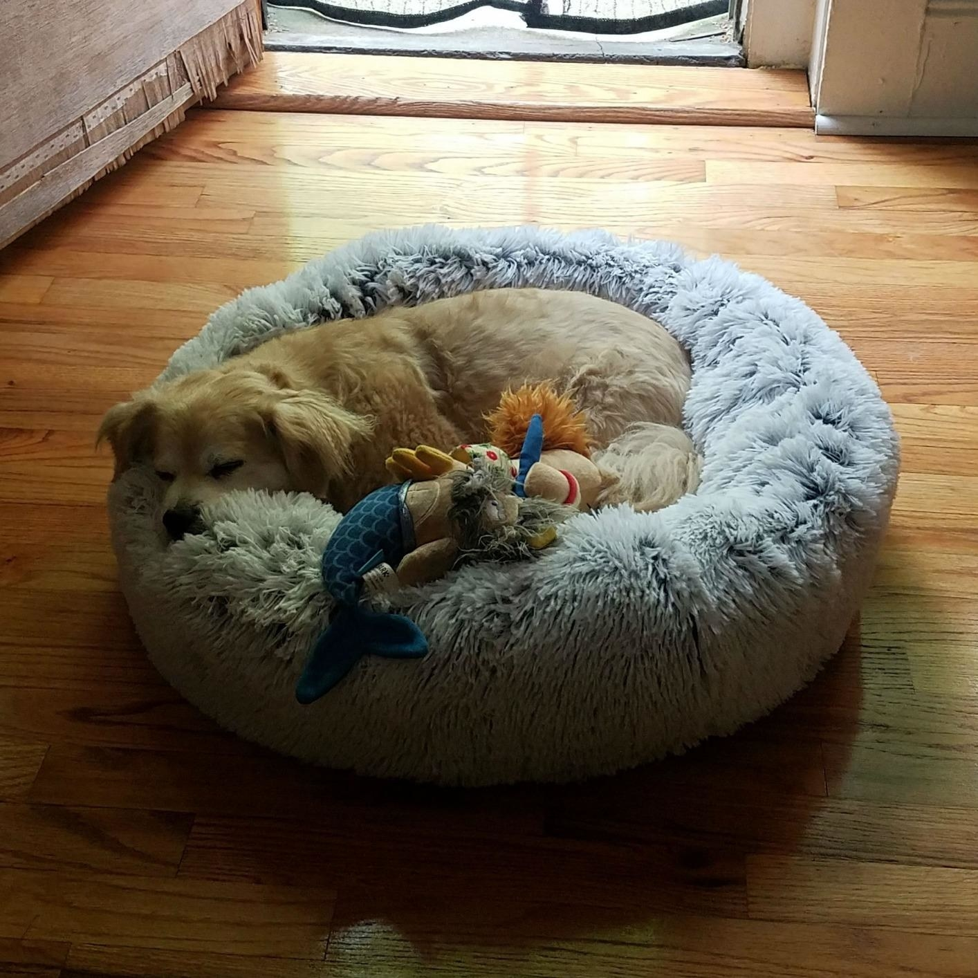 a reviewer's dog in the donut-shaped bed