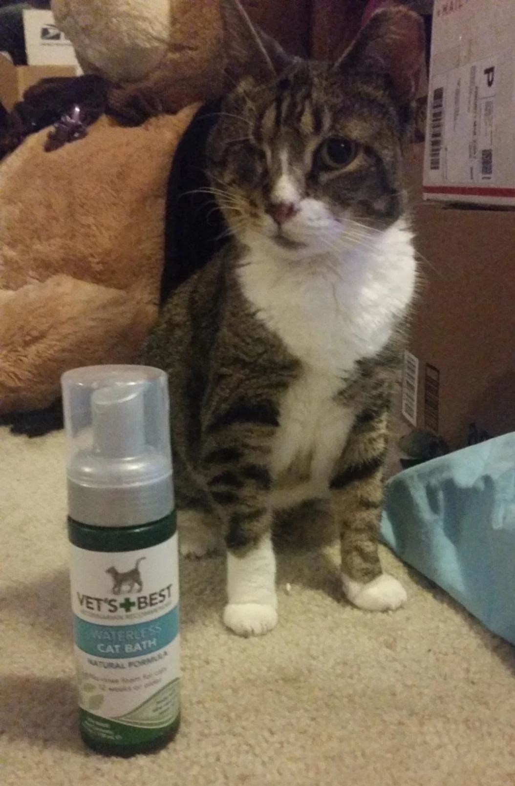 A reviewer's cat sitting next to a bottle of waterless pet wash