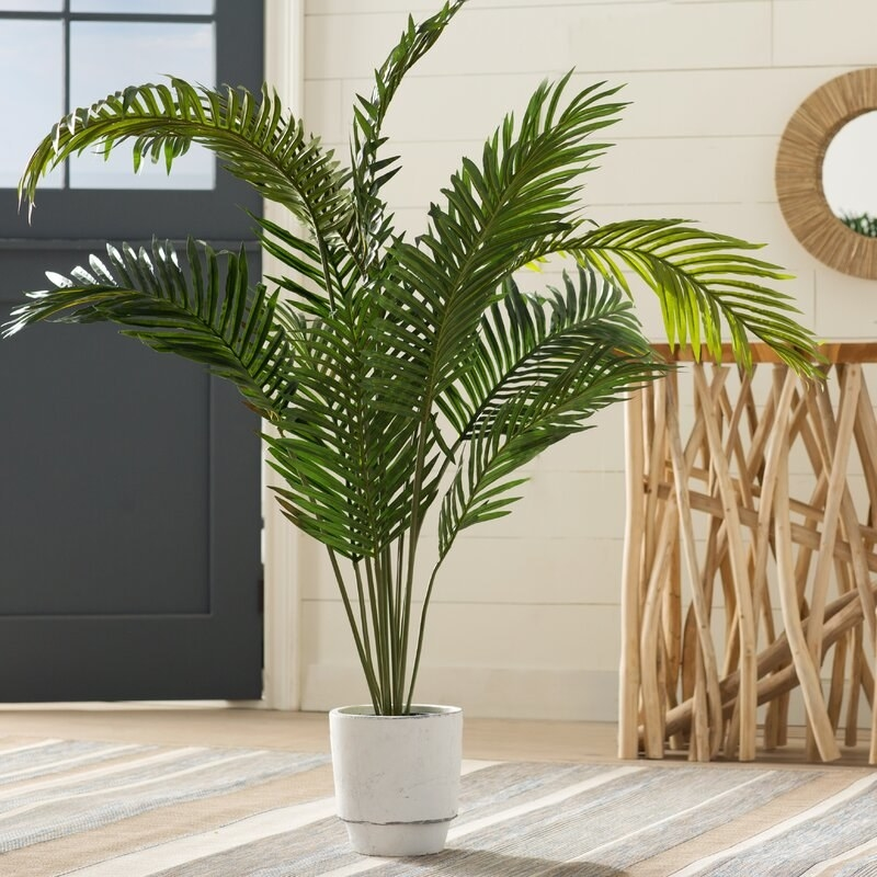 Palm in living space