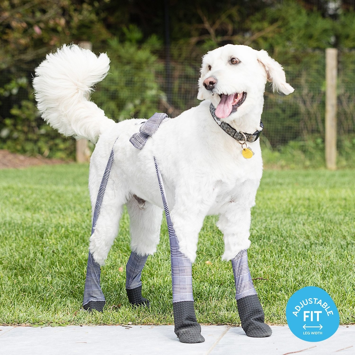 Dog wearing gray plaid leggings
