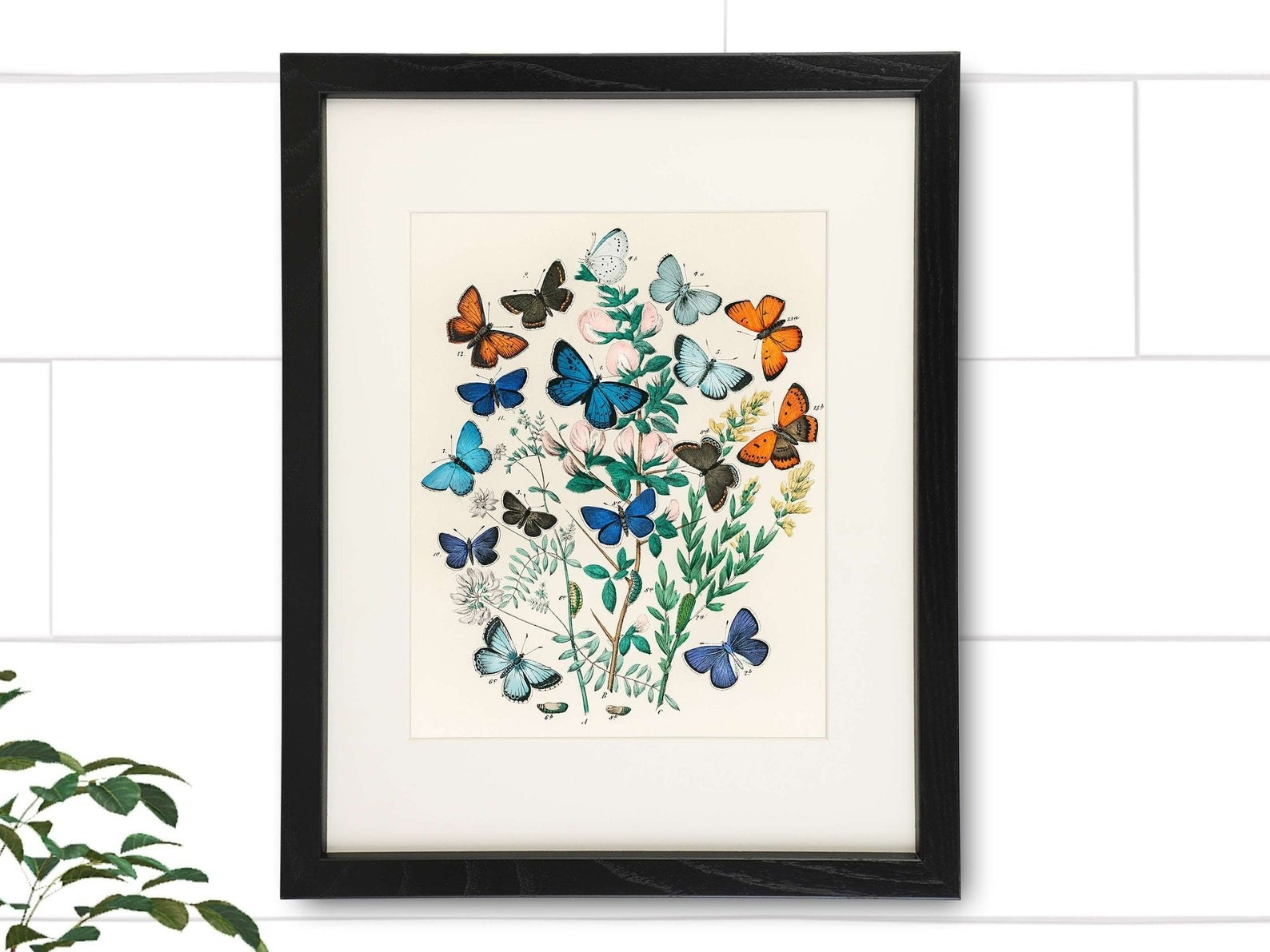 Butterfly print in black frame hanging on wall